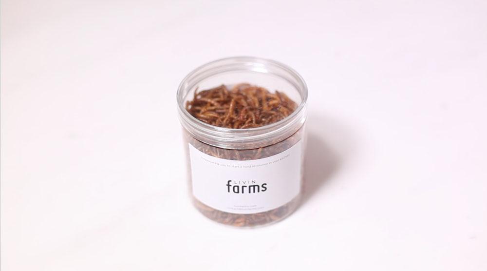 Livin Farms Hive: meelworm